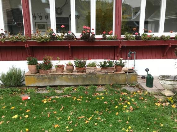 der Betontrog soll durch eine schlichte Wasserstelle ersetzt werden